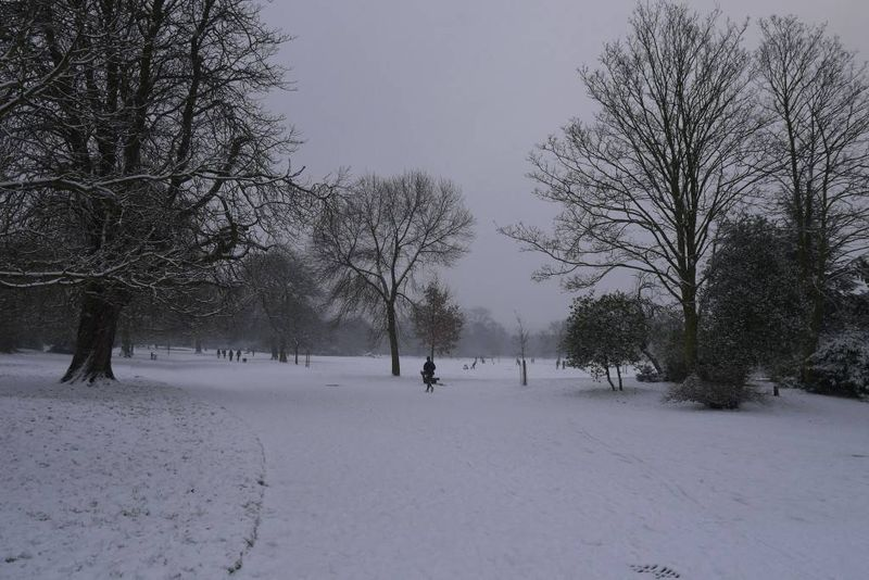 Dulwich Park in the Snow