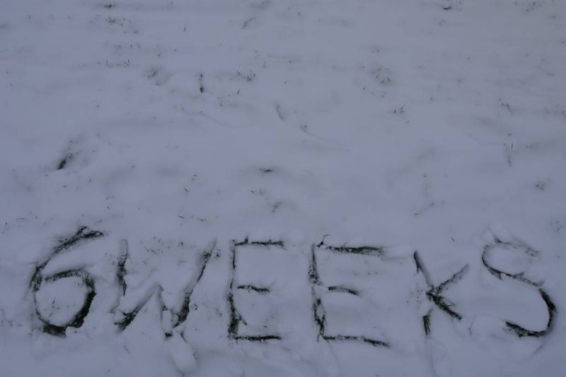 '6 Weeks' Written in the Snow