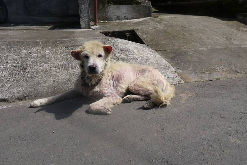 Street Dog in Bali
