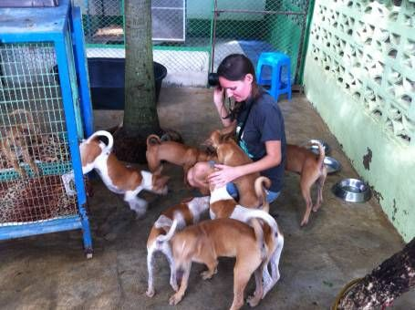 Volunteering at the Dog Rescue Project in Thailand