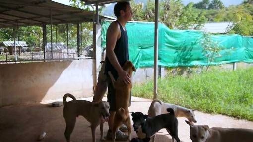 Andrew Socialising with Rescue Dogs at the Elephant Nature Park