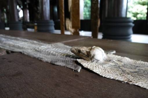 Snake Skin, the Black House Chiang Rai