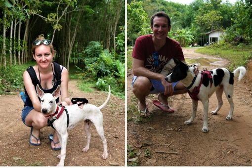Walking dogs from Lanta Animal Welfare, Thailand