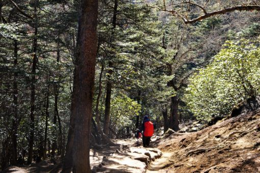 Trekking through the forest from Tengboche to Debuche