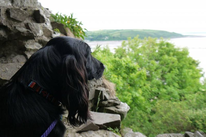 Brooke looking out over Llansteffan, Wales