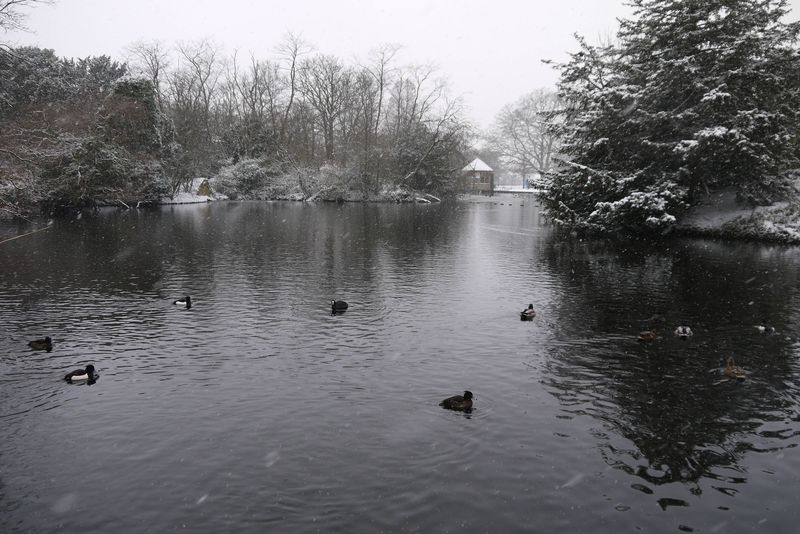Ducks on the Frozen Lake