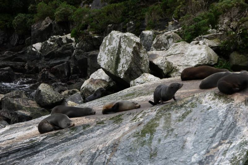 Seals at Milford Sound, New Zealand