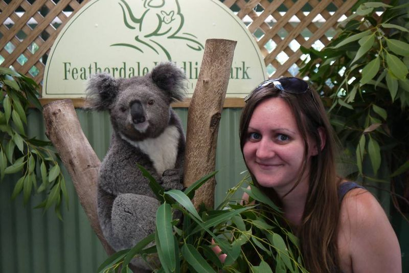 Amy's first encounter with a koala at Featherdale