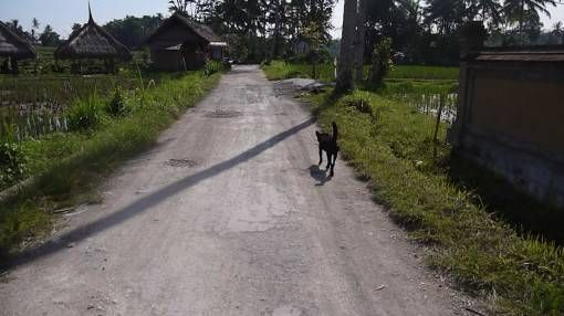 Stray Dog in Indonesia