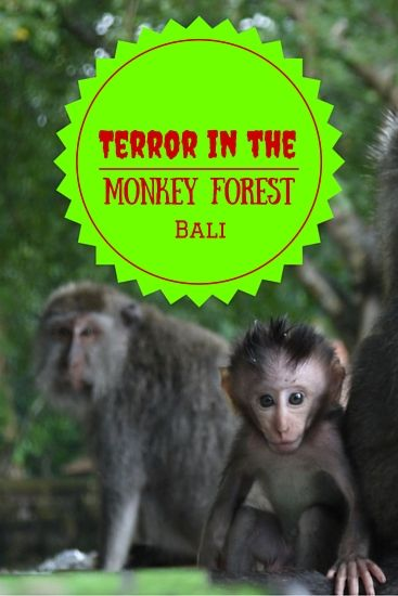 Terror in the Monkey Forest