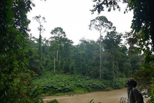 Danum Valley Field Centre, Borneo