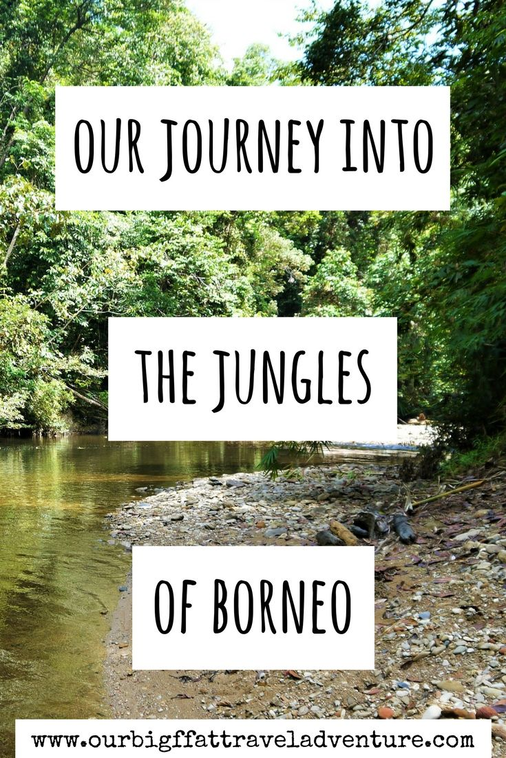 our journey into the jungles of borneo pinterest pin