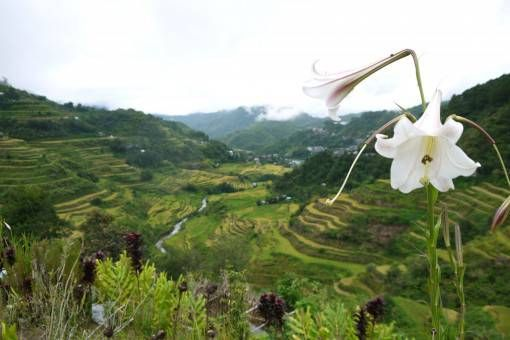 Banaue Rice Terraces, the Philippines