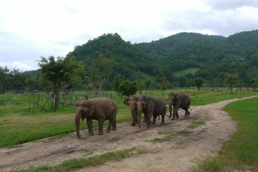 Elephants in Thailand at the Elephant Nature Park