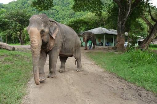 The Elephant Nature Park, Chiang Mai Thailand