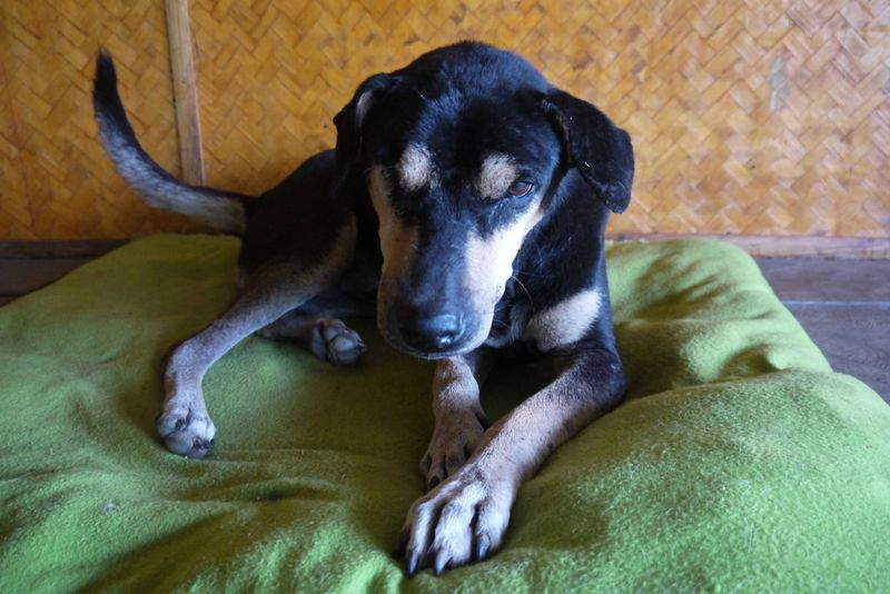 Momon, One-Eyed Dog at the Dog Rescue Project, Thailand