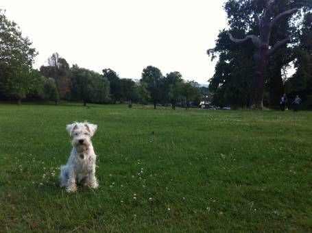 Boo in Crystal Palace Park