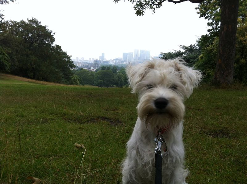 Walking Boo in Greenwich Park