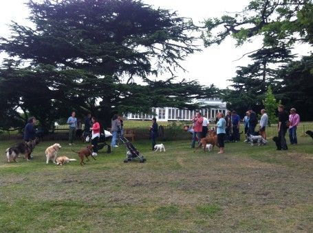 Dog walking on Streatham Common