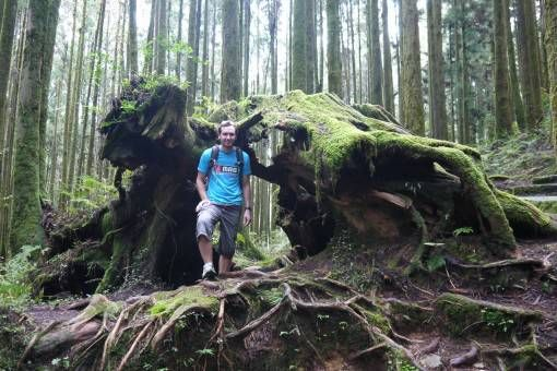 Pig Tree Stump in Alishan, Taiwan