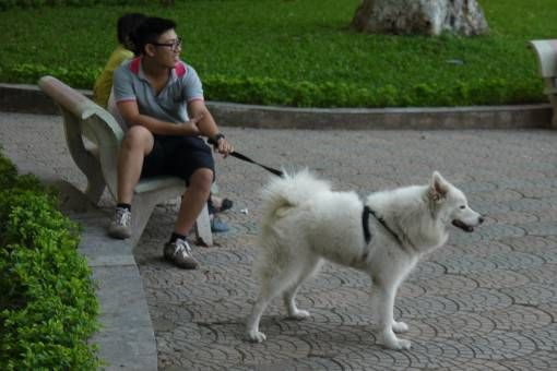 Dog Walking By Hoan Kiem Lake in Hanoi