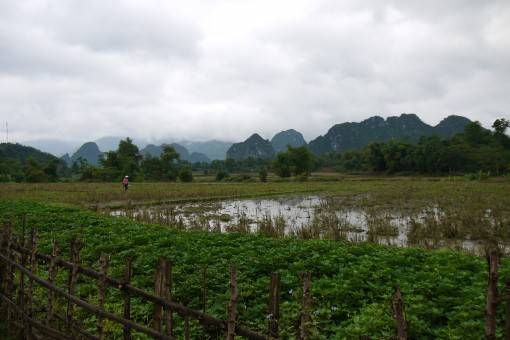 Fields in Northern Vietnam