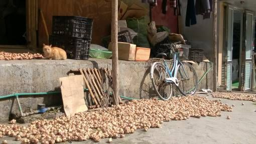 Cat and Onions in Sapa Town