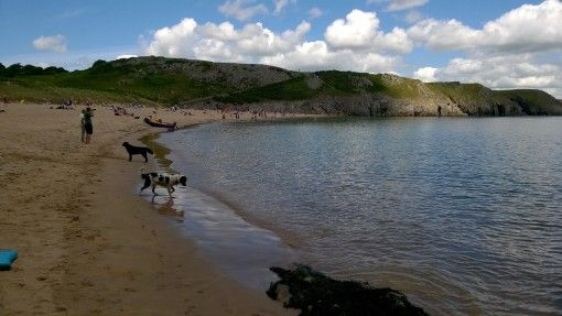 Dogs enjoying Barafundle Bay, Pembrokeshire