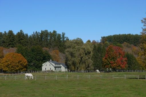 Horses and Fall Foliage at Billings Farm, Vermont