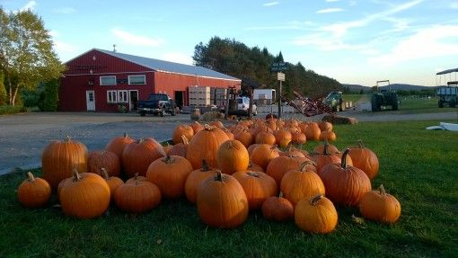 Pile of Pumpkins during fall
