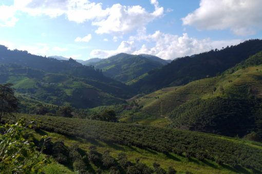Wang Put Tan Tea Plantations, Mae Salong, Thailand