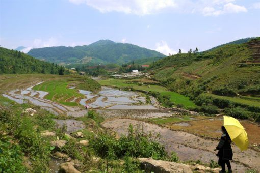 Destinations in Vietnam: Sapa rice fields