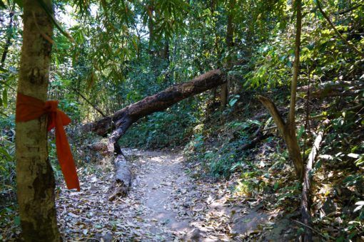Monk's orange robe on the Monk's Trail, Chiang Mai