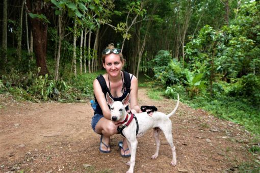Amy walking a dog from the Koh Lanta animal sanctuary