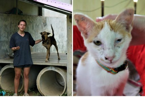 three leggeed dog and a cat at Lanta Animal Welfare, Thailand