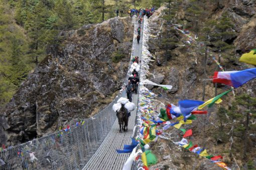 Yaks crossing a suspension bridge on the Everest Base Camp Trek, Nepal