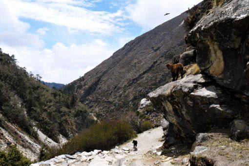 Animals on the Everest Base Camp Trek