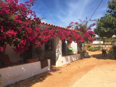 One of our house sitting opportunities, in Lagos, Portugal