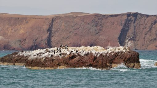 Group of birds nesting on a rock in Paracas National Reserve, Peru