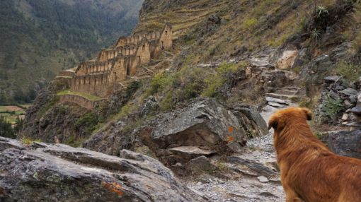 Our hiking companion in Ollantaytambo, Peru