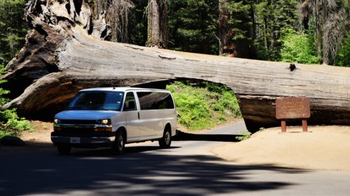Van driving through a fallen Sequoia Tree in Sequoia National Park, California