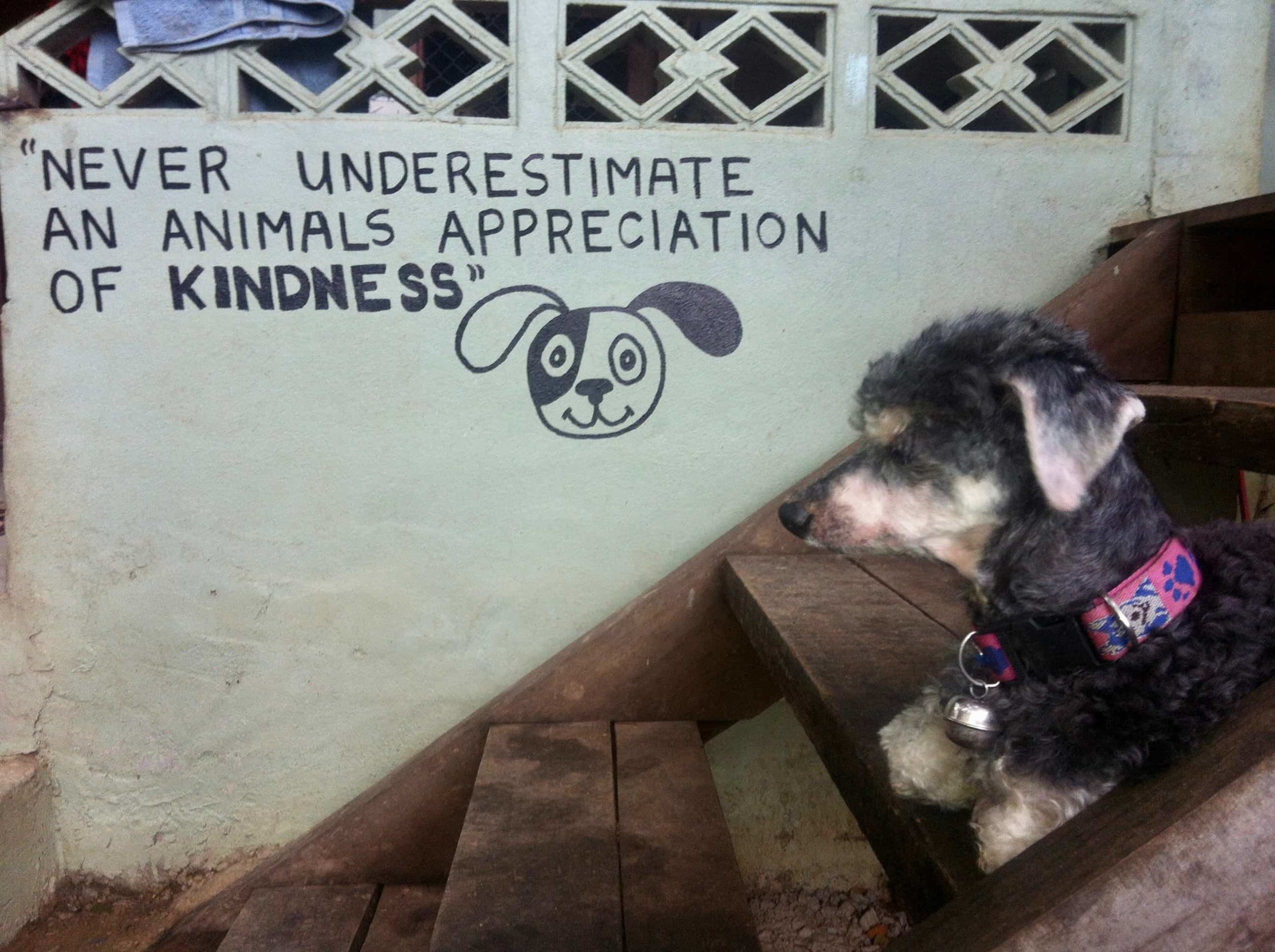 Never underestimate an animals appreciation of kindness - volunteering at the Dog Rescue Project in Thailand